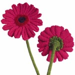 gerberas knitting pattern